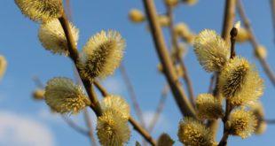 koll på pollen