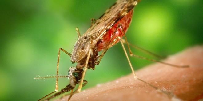 malariatabletter