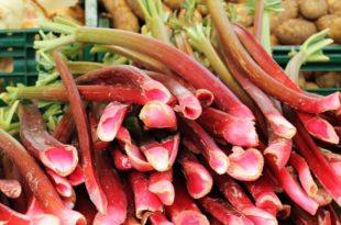 Försök att äta lika mycket rabarber varje dag så blir det lättare