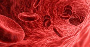 hjärtmedicinen Pycnogenol
